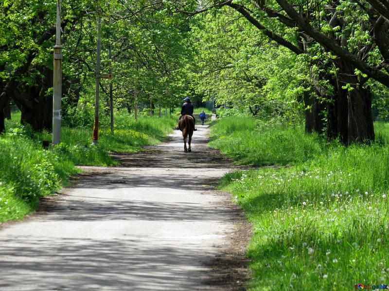 Passeggiata a cavallo, Rigone in Chianti, agriturismo